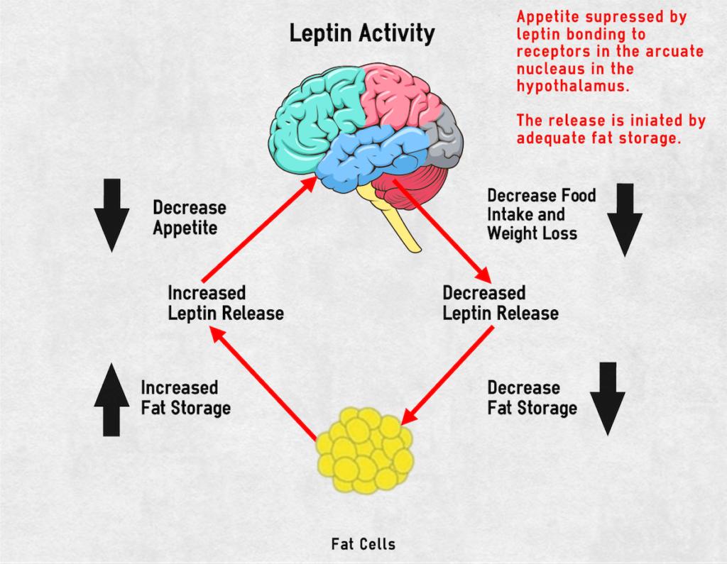 Λεπτίνη